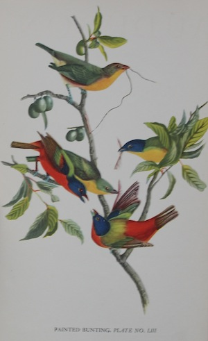 Audubon Plate